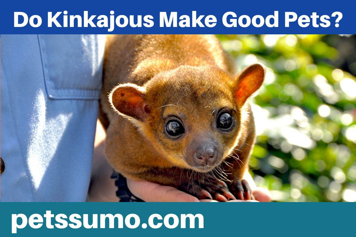 kinkajous as a pet