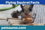 Flying Squirrel Facts- Interesting Facts about Flying Squirrels