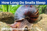 How Long Do Snails Sleep – Snail Sleeping Habits and Places