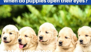 When Do Puppies Open Their Eyes? Dog Development Lifecycle