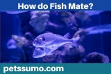 How Do Fish Mate